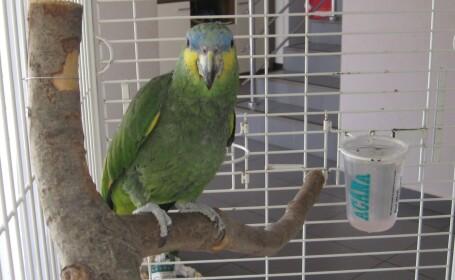 Coco - papagalul vorbitor