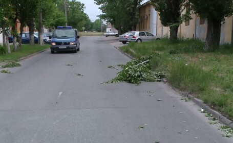 timis copac cazut