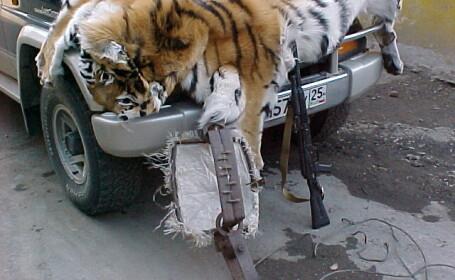 Tigru braconaj
