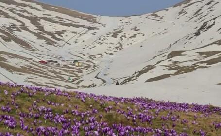 Peste 15.000 de romani au ales aerul curat de la munte in locul nisipului si scoicilor, de 1 Mai