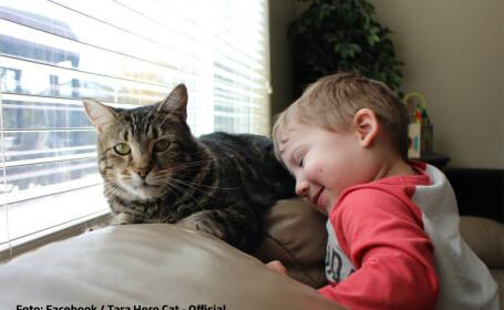 Tara pisica eroina cu copilul