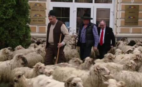 Ciobani - STIRI