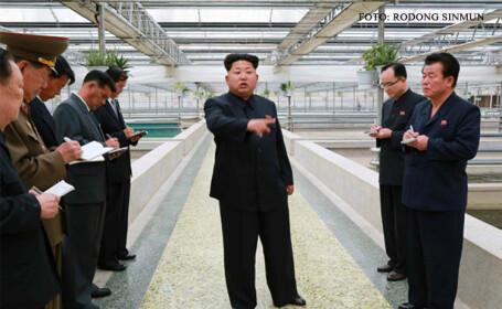 Vicepremierul nord-coreean ar fi fost executat dupa ce a criticat politicile forestiere puse in aplicare de Kim Jong-Un