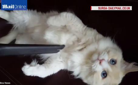 pisica aspirator
