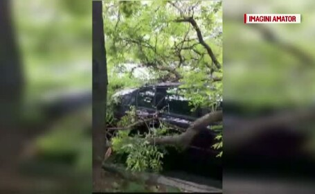 Un copac s-a prabusit in curtea Spitalului Parhon din Capitala. O masina a fost facut praf la impact