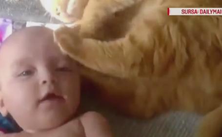 Incercarea amuzanta a unei pisicute de a se imprieteni cu un bebelus. Ce face cand vede ca nu este bagata in seama