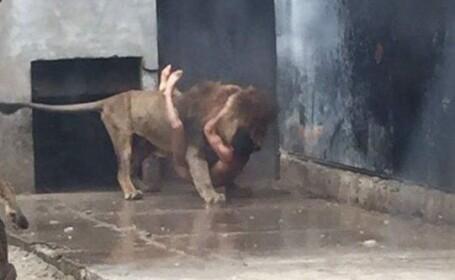 Scene infioratoare la o gradina zoologica din Chile. Ce a urmat dupa ce un tanar s-a dezbracat si a intrat in cusca leilor
