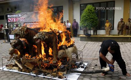 tigri impaiati arsi in Aceh