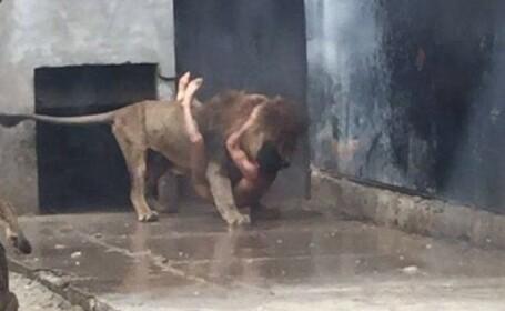 Cine este tanarul care s-a aruncat dezbracat in cusca leilor, la zoo. Mesajul din biletul descoperit in hainele abandonate