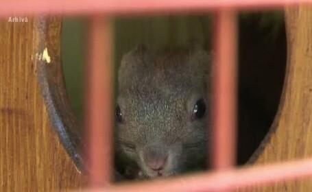 Protest in Bistrita pentru eliberarea ultimei veverite ramase intr-o voliera din parc: \