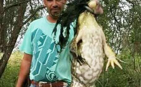 Broasca gigant de dimensiunea unui caine