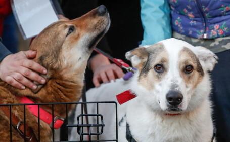 Autorităţile ruse extermină câinii şi pisicile maidaneze, înaintea CM de Fotbal