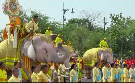 Paradă impresionantă pentru noul rege al Thailandei. Elefanții, simbol sacru al monarhiei