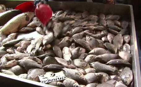 Alertă ANPC: 1.6 tone de pește stricat, retras de pe piață. Marfa era din import
