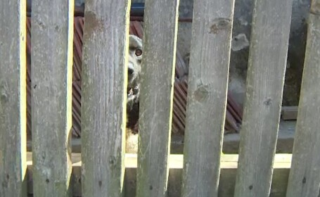 O femeie a fost sfâșiată de 5 câini, după ce a mers să-și ajute tatăl