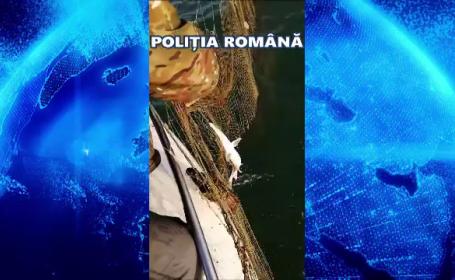 Delfini salvați din plasele braconierilor. Ce a descoperit poliția