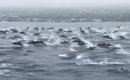 delfini california