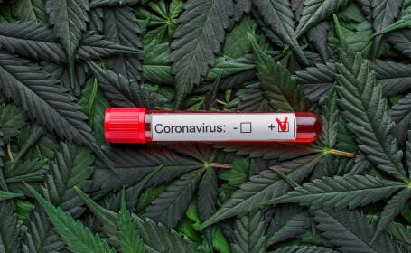 Canabis coronavirus