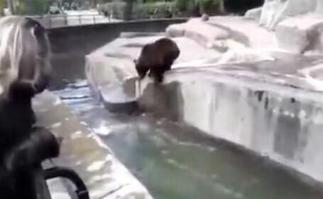 polonez lupta cu ursul la zoo