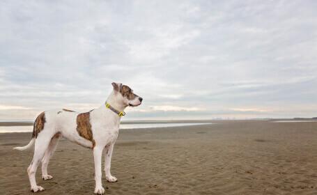 Un cuplu din Australia nu mai are voie să aibă animale, după ce și-a hrănit câinii cu mâncare vegană