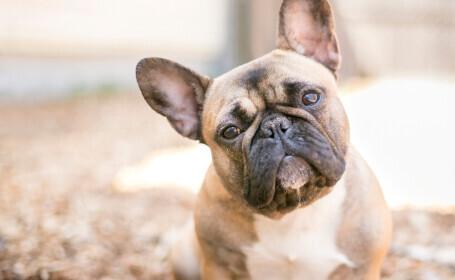 """Mai mulți italieni au cumpărat """"câini de rasă pură"""" de la un bărbat din Dej. Ce au primit în schimb"""