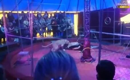 VIDEO. Un artist de circ a fost atacat de un leu în timpul unui spectacol la care asistau mulți copii