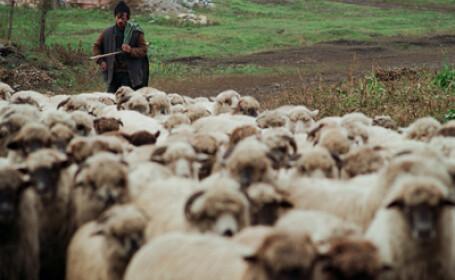 Criza financiara loveste puternic si afacerile ciobanilor