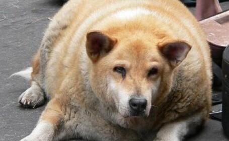 Un an de inchisoare pentru stapanii care isi hranesc excesiv animalele