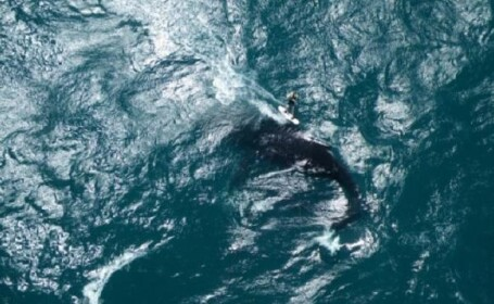 surf balena