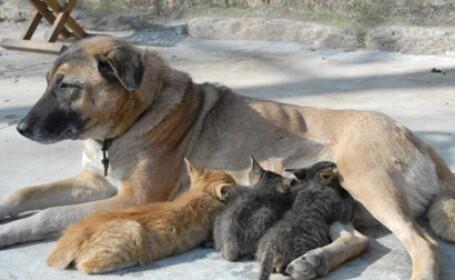 catea pisici