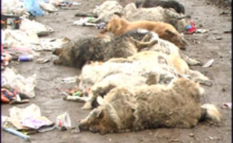Peisaj sinistru la Craiova si Motru. Zeci de caini gasiti morti pe strazi