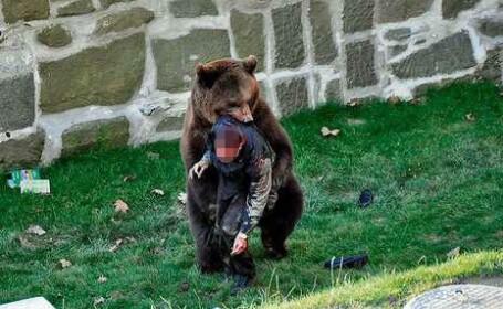 VIDEO SOCANT! Mutilat de un urs, dupa ce a sarit in tarcul animalului!