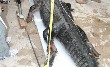 A dormit cu un crocodil de 136 de kilograme sub pat. \
