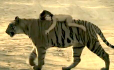 Copil calare pe un tigru