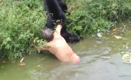 Atacat de maimute