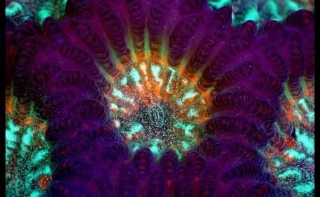 Viata uimitoare care se afla sub microscop. FOTOGRAFII ale unei lumi nevazute cu ochiul liber