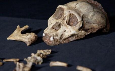 Descoperirea uimitoare care ne va arata cum traiau stramosii nostri acum doua milioane de ani