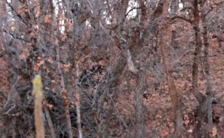Bigfoot in padure