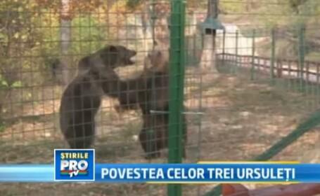 Au schimbat cusca de 15 metri patrati pe 9 hectare de padure. Sansa la libertate pentru 3 ursuleti