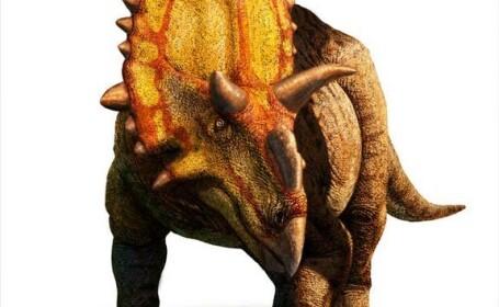 dinozaurul cu coarne de extraterestru, Xenoceratops foremostensis