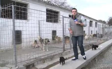 Orasul din Romania in care maidanezii raman pe strazi pentru ca o PANTA nu e suficient de inclinata