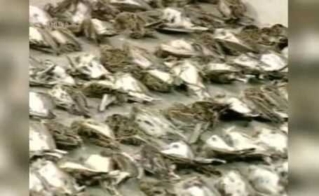 Peste 5.000 de ciocarlii si prepelite, dar si un vultur, descoperite in pensiunea unui italian
