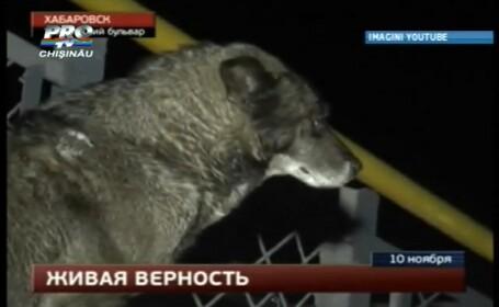 Hachiko de Rusia. Un caine isi asteapta stapanul in port de peste 3 saptamani. VIDEO