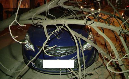 Pompierii din Timisoara au intervenit miercuri seara pentru a indeparta un pom cazut peste o masina