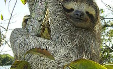 Lenesii, animalele despre care cercetatorii nu stiu cu exactitate cat traiesc