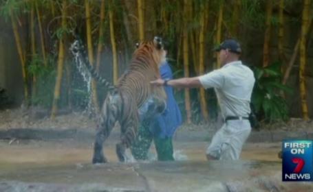 Un dresor din Australia, atacat de tigru in fata vizitatorilor. Ce se va intampla cu animalul