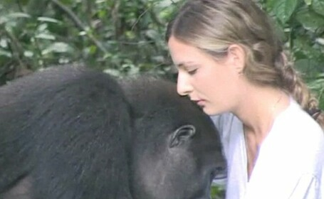 Cum reactioneaza o gorila pusa fata in fata cu un bebelus de 18 luni. Intalnirea a fost repetata dupa 25 de ani. VIDEO