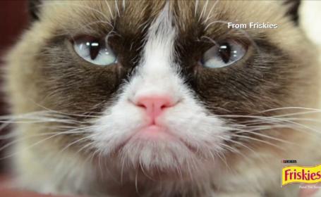 Grumpy Cat, cea mai celebra pisica de pe internet, tratata ca o vedeta la San Francisco. Sute de fani si-au facut poze cu ea