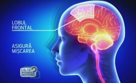Folosim doar o parte din creier. Adevarul din spatele acestei afirmatii si cum devenim mai inteligenti prin alimentatie