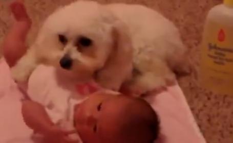 caine, bebelus